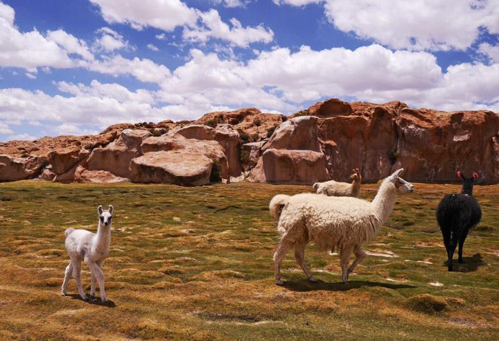2-Болівія-сафарі11