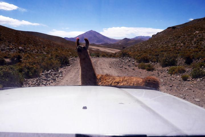 2-Болівія-сафарі17
