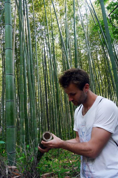 7-Бамбуковий-ліс1