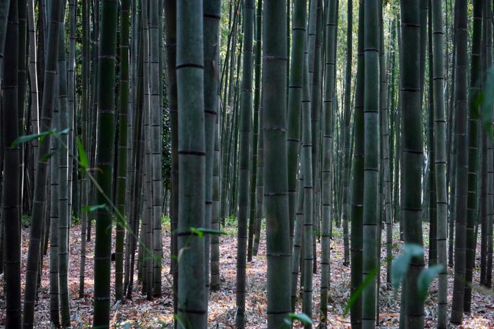 7-Бамбуковий-ліс2