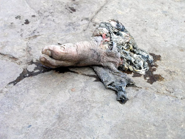Нога у Варанасі
