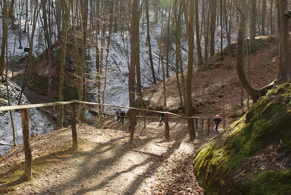 крехів ліс