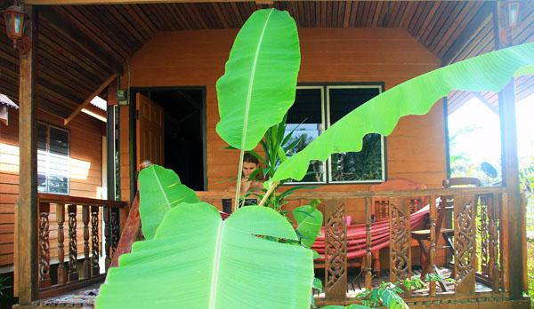 пальма коло будинку