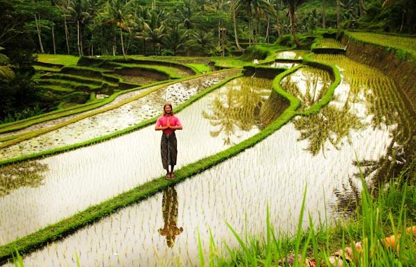 балі-рис