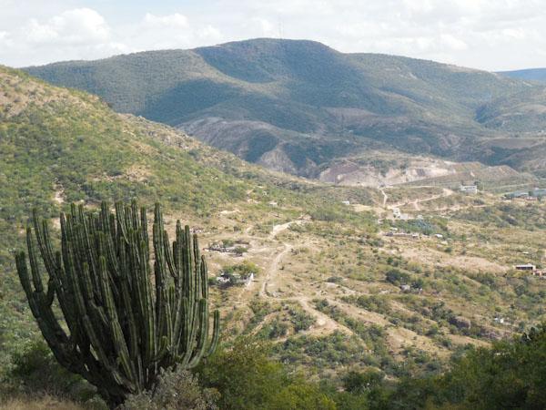 кактус-мексика