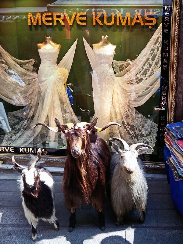кози і сукні