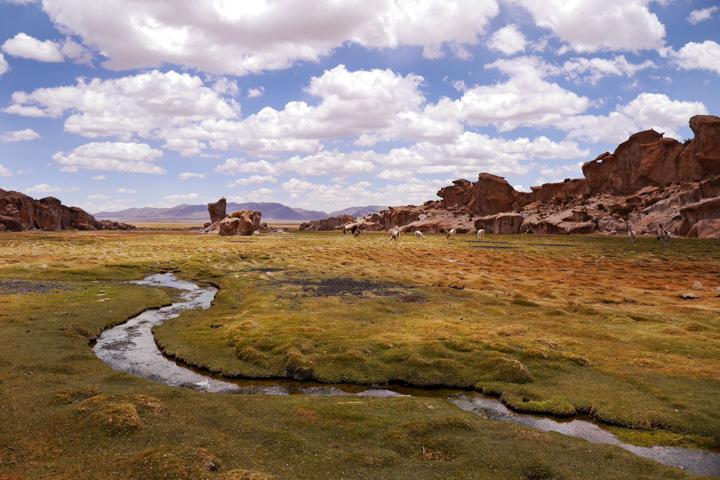 2-Болівія-сафарі9