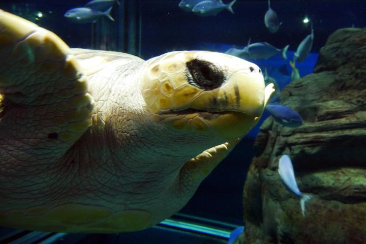 1-Oceanarium4