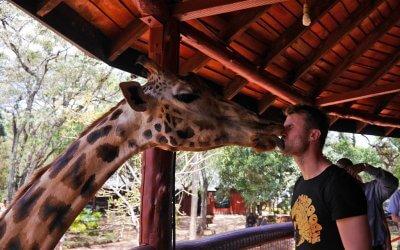 Нестандартна Кенія – поцілунок жирафи, африканський мегаполіс та міські нетрі