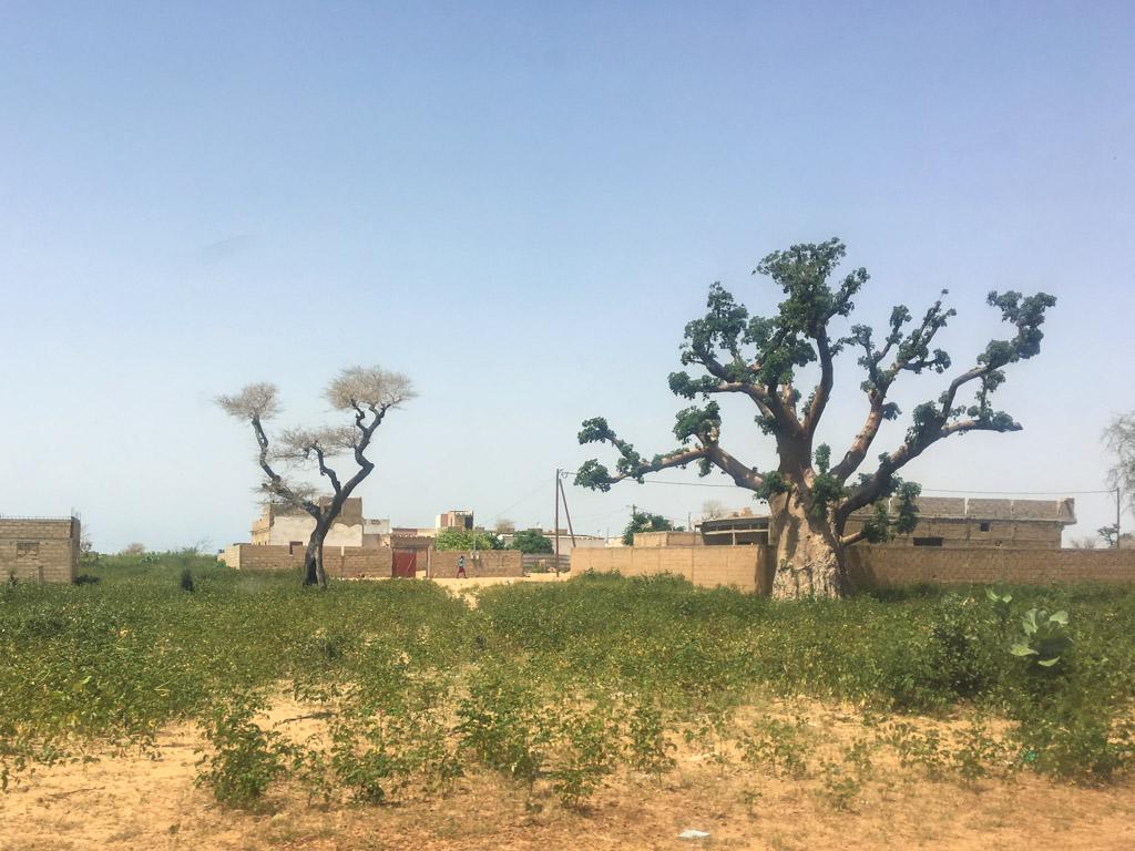 Сенегал, Сан-Луї