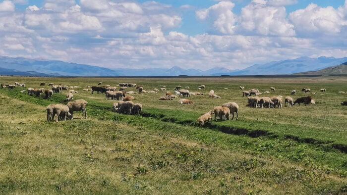 Пасовище в долині Шалкодесу